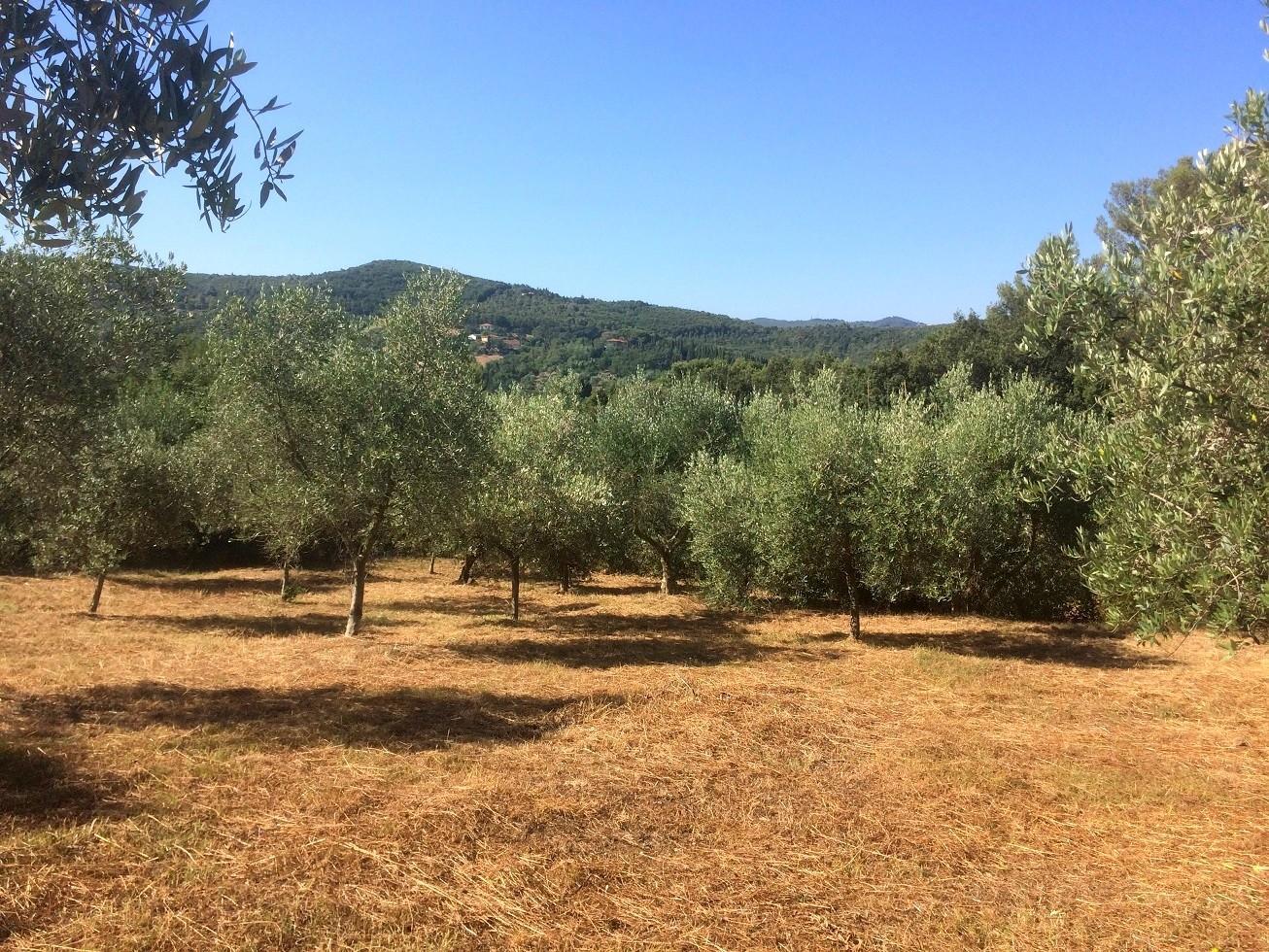 Terreno agricolo in vendita a Limoncino, Livorno