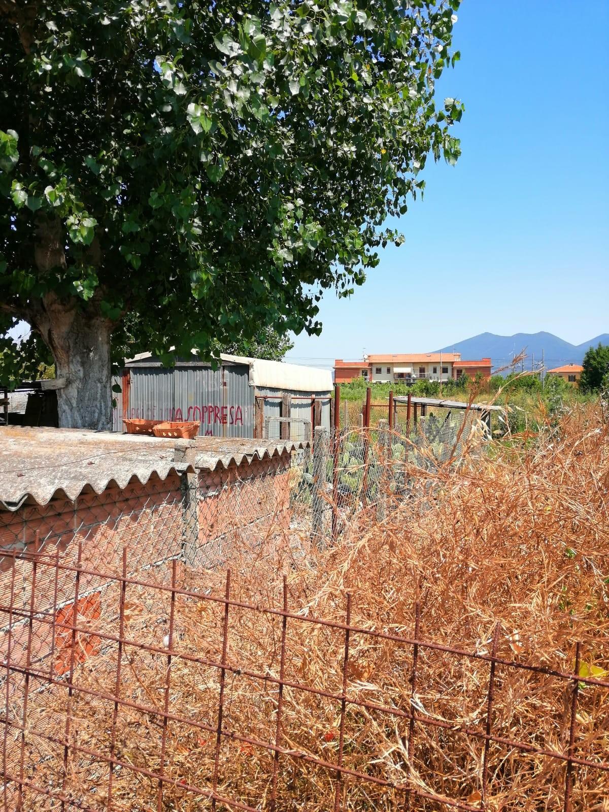 Terreno agricolo in vendita a Cascina (PI)