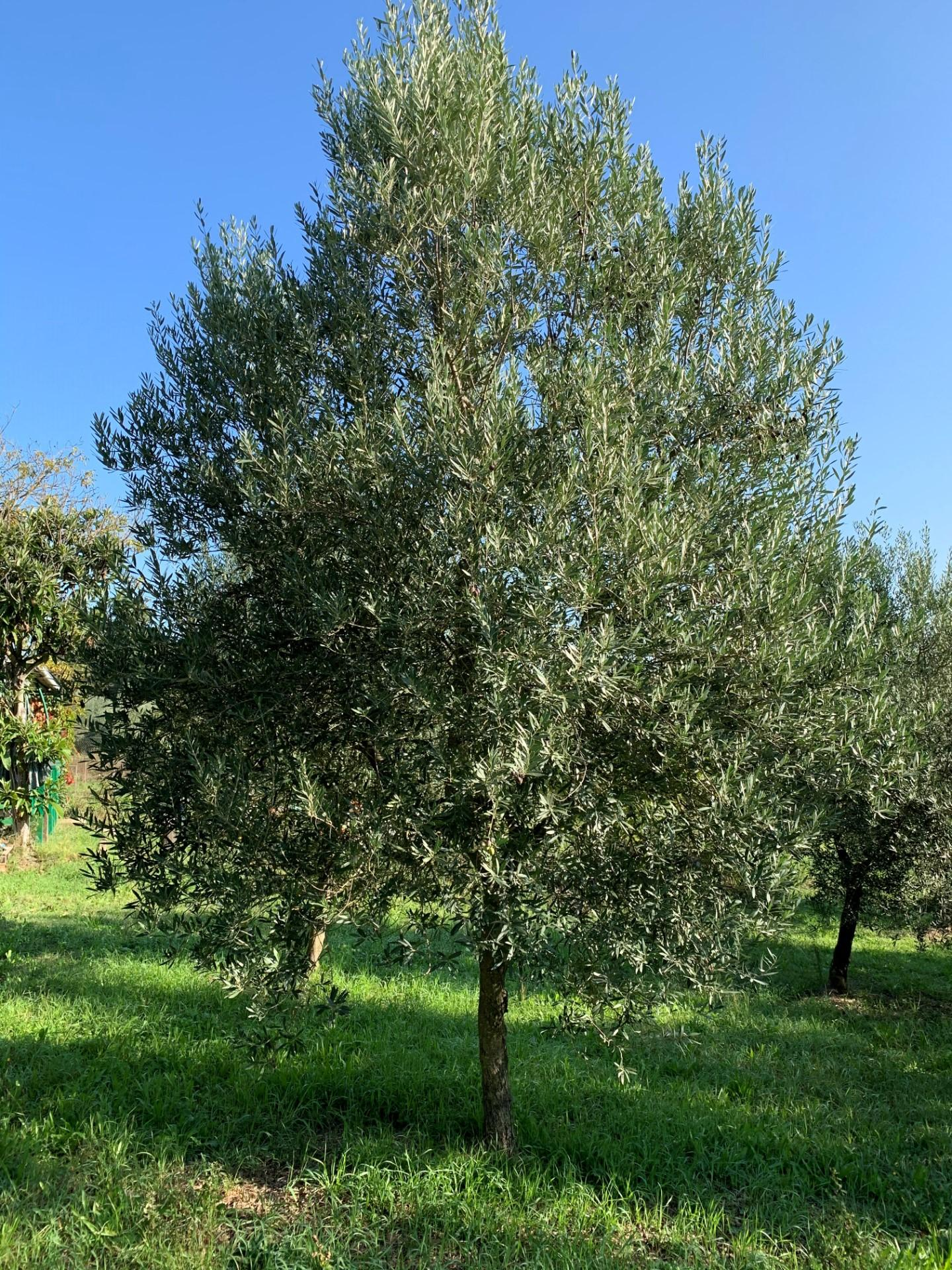 Terreno agricolo a Empoli