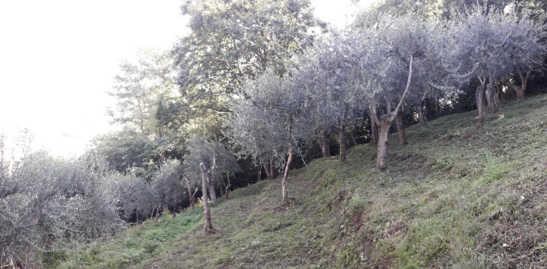 Terreno agricolo in vendita, rif. B002
