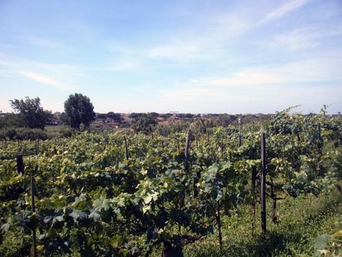 Terreno agricolo in vendita a Fossone, Carrara (MS)