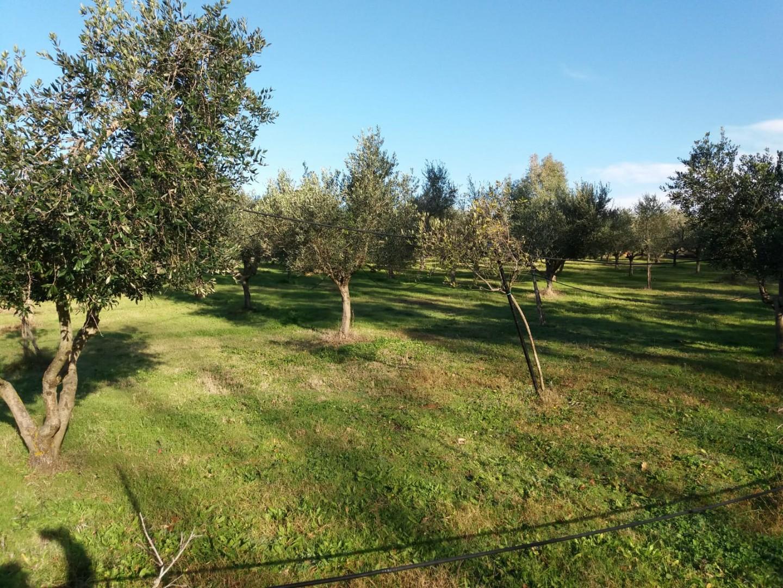 Terreno agricolo in vendita - Paratino, Cecina