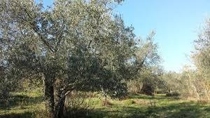 Terreno agricolo in vendita a Calci (PI)