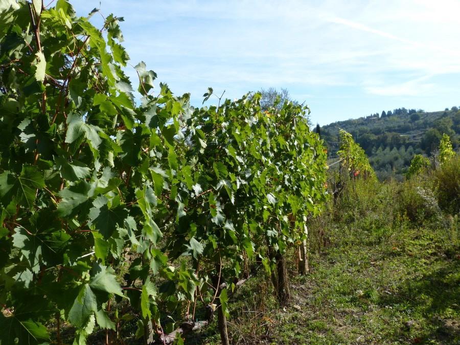 Farm for sale in Montalcino (SI)