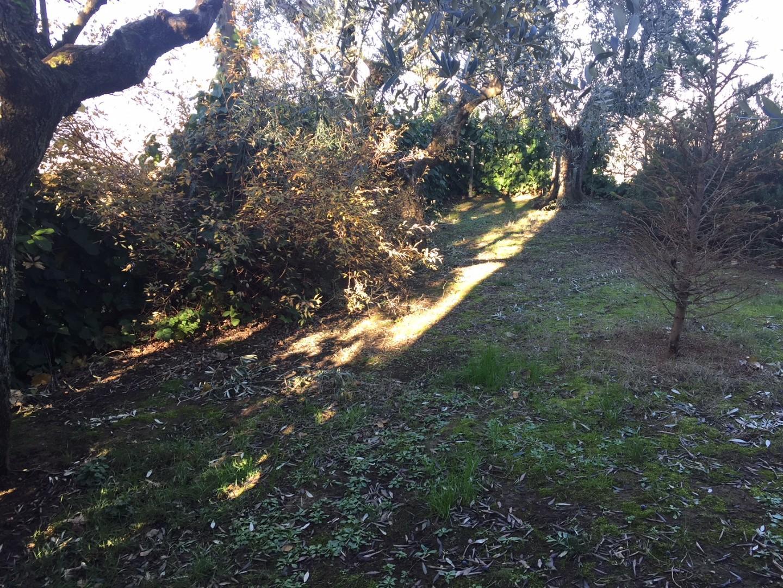 Villa singola - Quarrata (13/13)