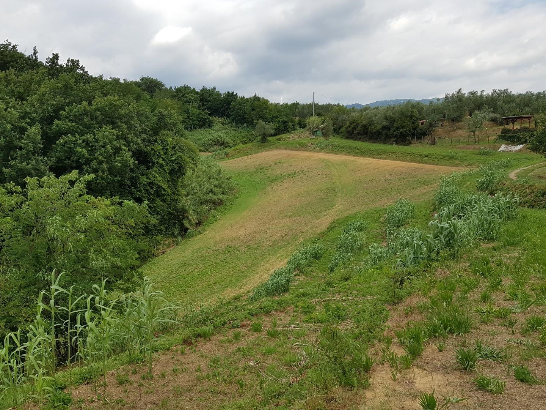 Terreno agricolo in vendita a Buggiano (PT)