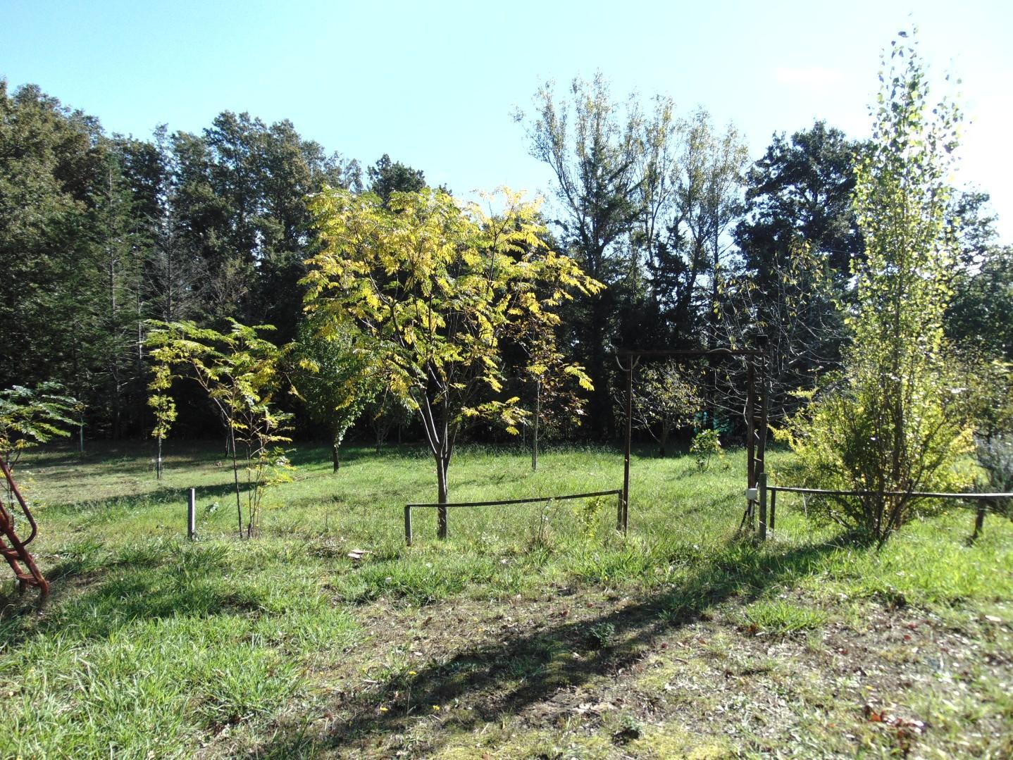 Terreno agricolo in vendita a Fauglia (PI)