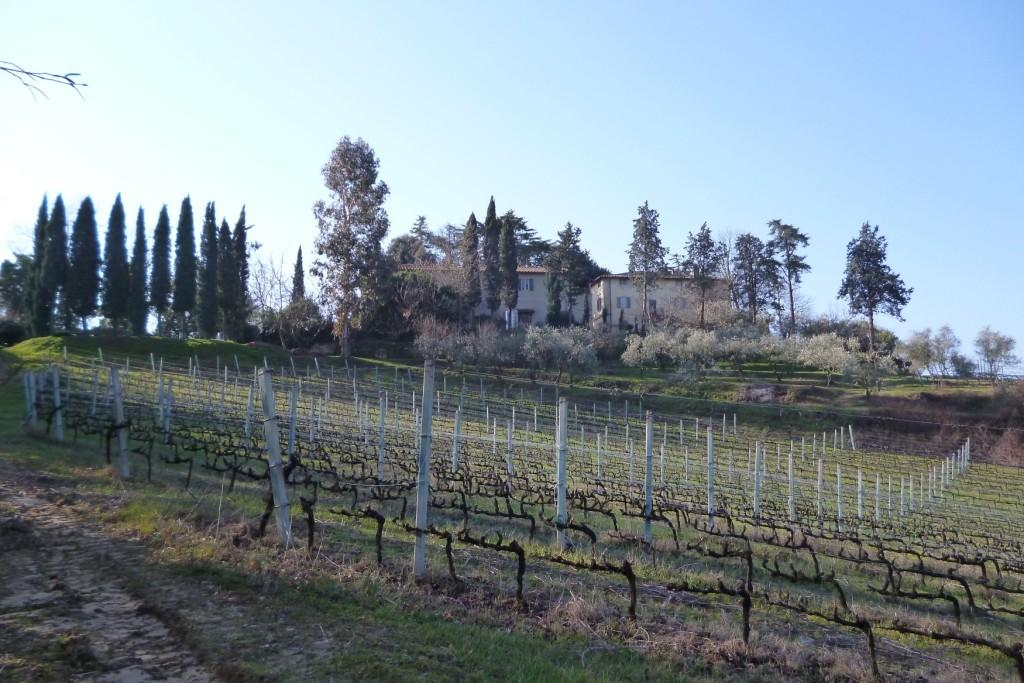 Azienda agricola in vendita a Pisa