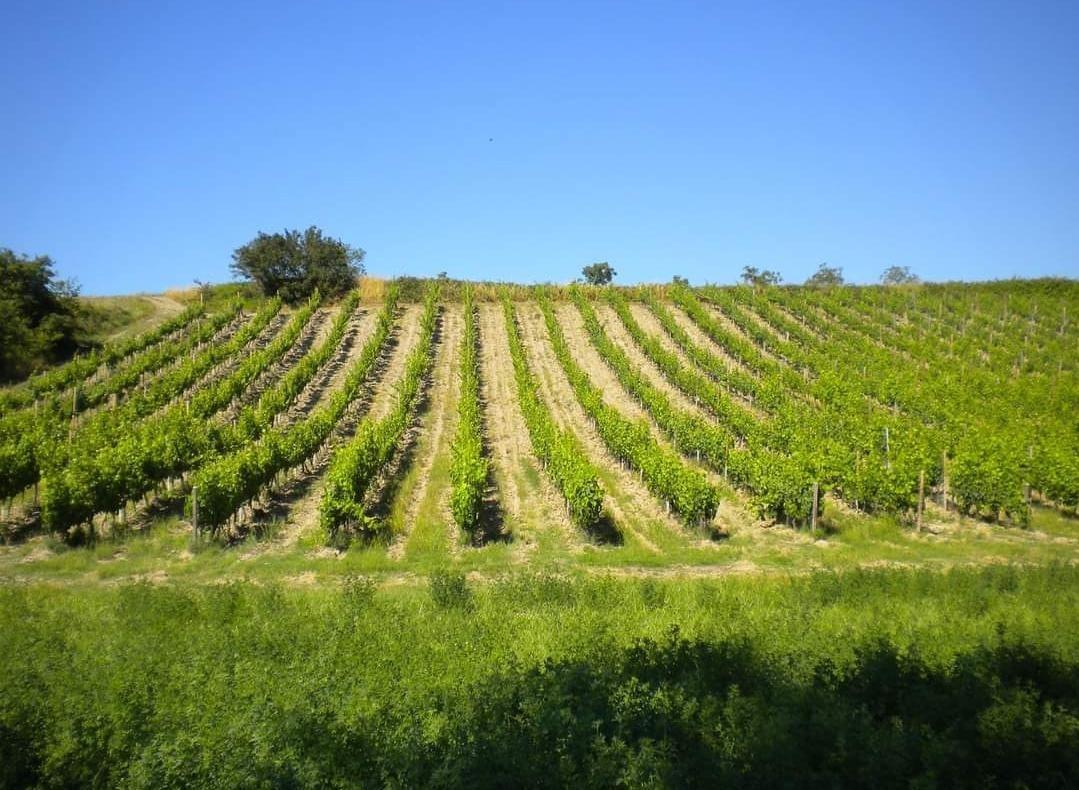 Terreno agricolo in vendita a Montespertoli (FI)