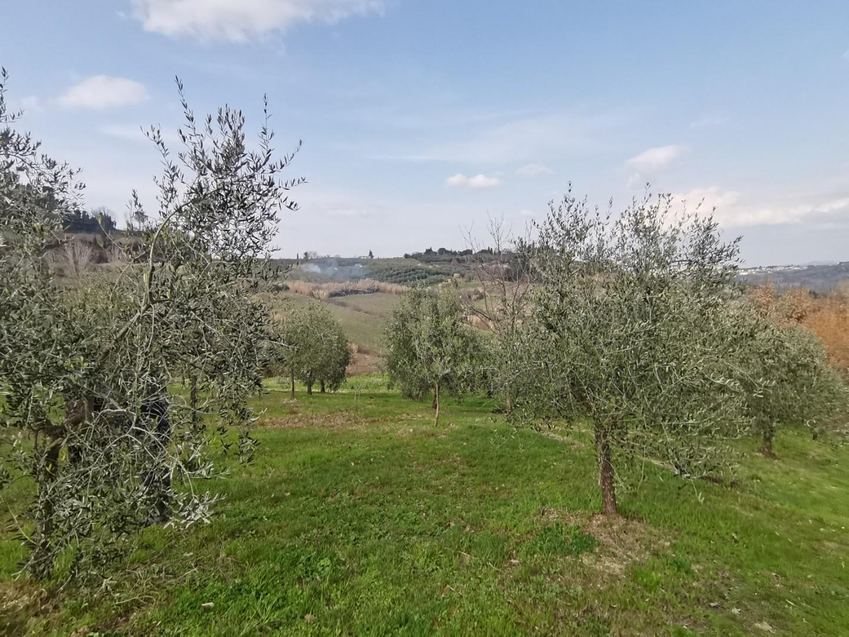 Terreno agricolo in vendita a Terricciola (PI)