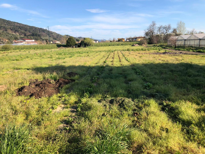 Terreno agricolo in vendita - Piano Di Mommio, Massarosa