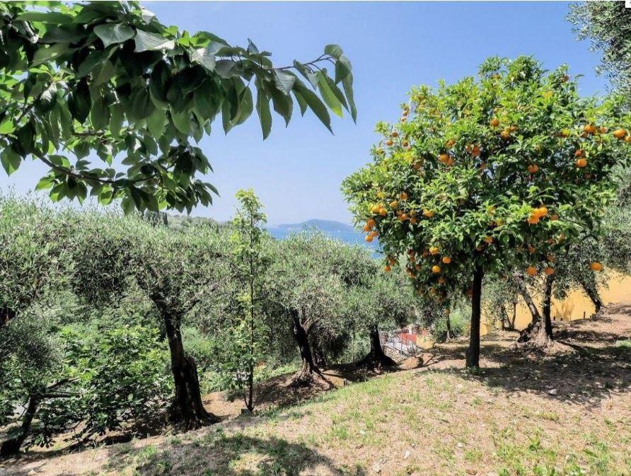 Villa singola - Lerici (37/40)