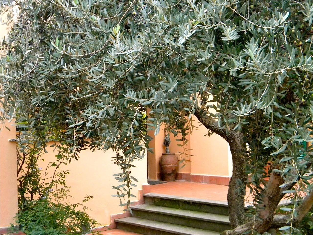 Villa singola - Campo, San Giuliano Terme (8/29)