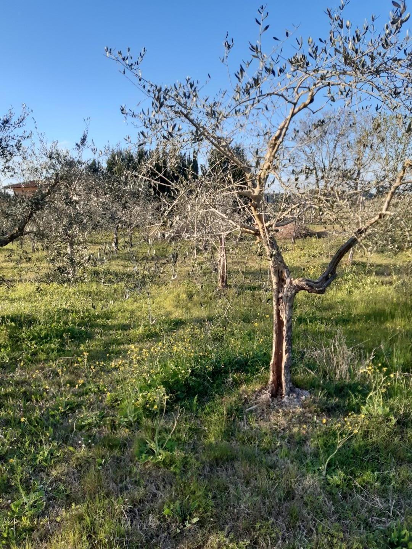 Terreno agricolo in vendita, rif. FC383