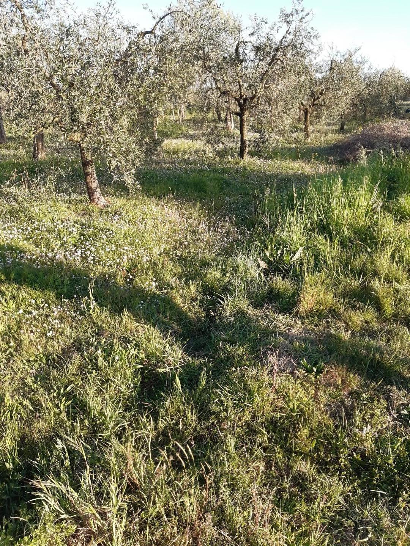 Terreno agricolo in vendita a Montecalvoli Basso, Santa Maria a Monte (PI)