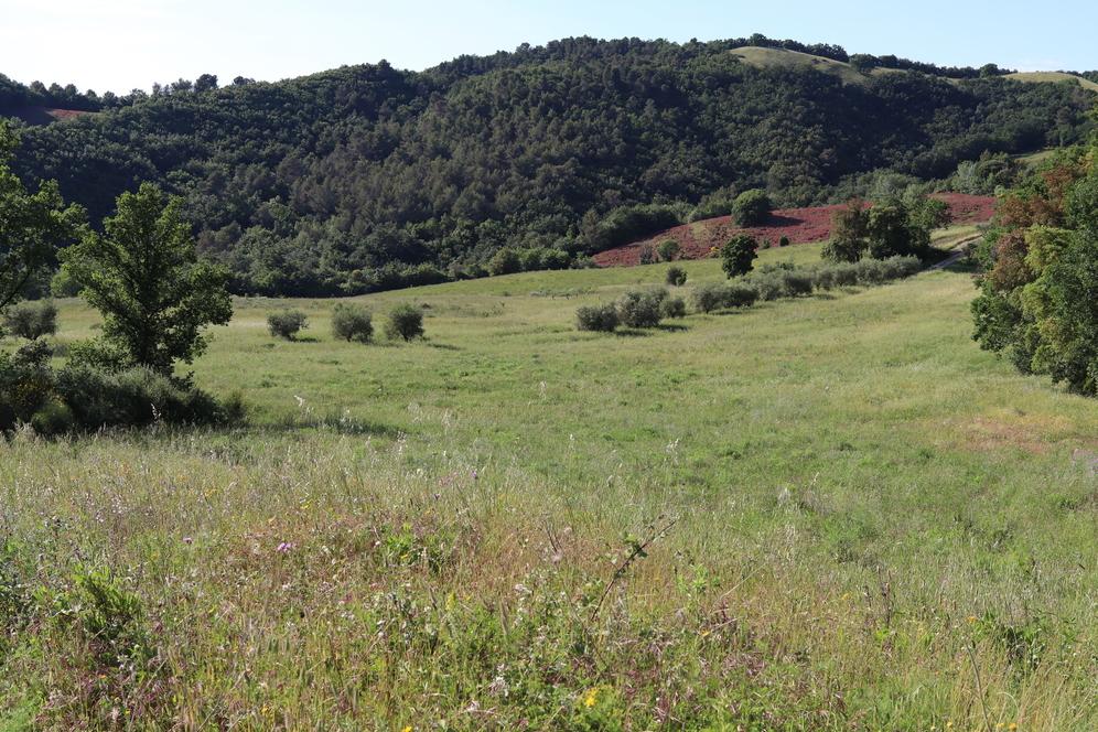 Terreno agricolo in vendita a Monterotondo Marittimo (GR)