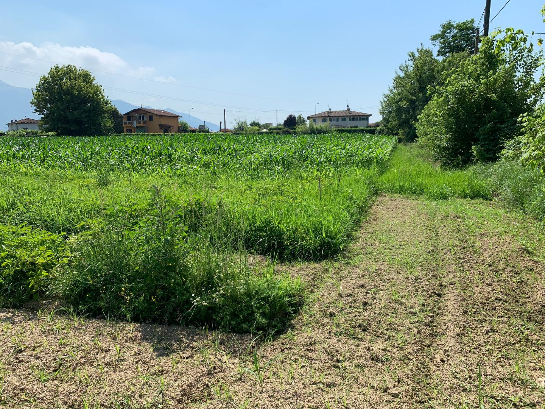 Terreno agricolo in vendita - Pietrasanta