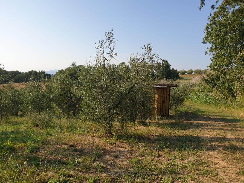 Terreno agricolo in vendita a Capannoli (PI)
