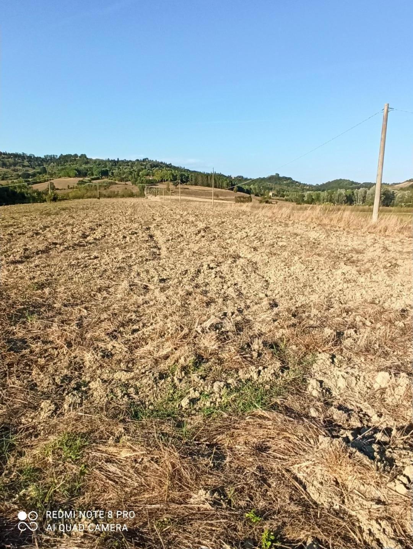 Azienda agricola in vendita, rif. AA102C