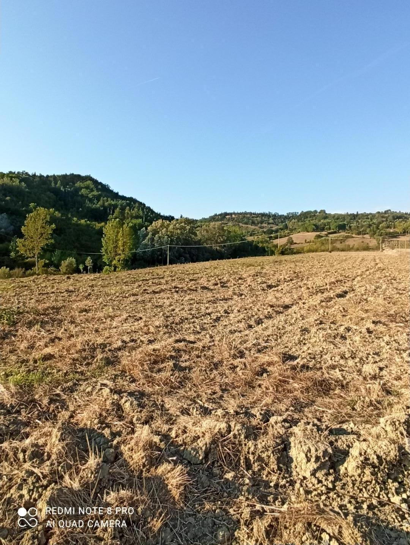 Azienda agricola in vendita a Toiano, Palaia (PI)