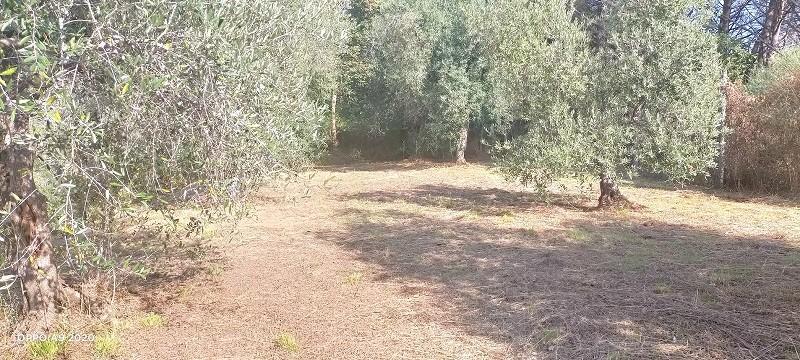 Terreno agricolo in vendita a Massarosa (LU)