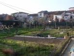 Terreno edif. residenziale a San Miniato (2/2)