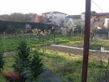 Terreno edif. residenziale a San Miniato (1/2)
