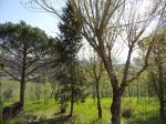 Villa singola a Capraia e Limite (3/5)