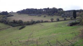 Azienda agricola a Pomarance (2/5)