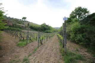 Azienda agricola a Castelnuovo Berardenga (5/5)