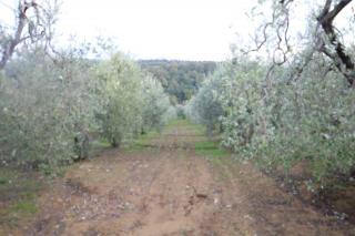 Terreno agricolo a Vinci (4/5)