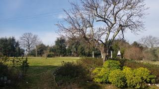 Villa singola a Collesalvetti (3/5)