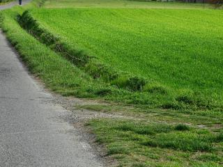Terreno agricolo a San Miniato (2/2)