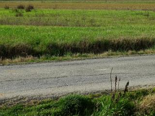 Terreno agricolo a San Miniato (1/2)