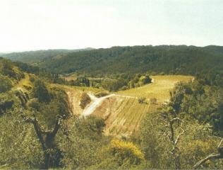 Azienda agricola a San Miniato (2/5)