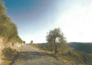 Azienda agricola a San Miniato (4/5)