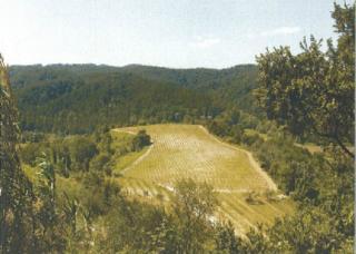 Azienda agricola a San Miniato (5/5)