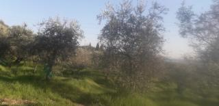 Terreno agricolo a Massarosa (3/5)