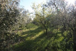 Terreno agricolo a Larciano (5/5)
