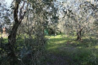 Terreno agricolo a Larciano (2/5)