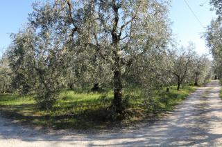 Terreno agricolo a Larciano (4/5)