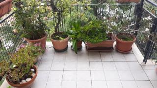 Appartamento a Carrara (4/5)