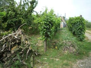Terreno agricolo a Montopoli in Val d'Arno (5/5)