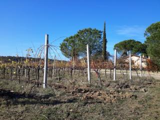 Terreno agricolo a Castiglione del Lago (3/5)