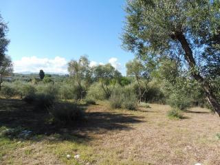Terreno edif. residenziale a Capannoli (4/5)