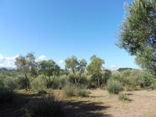 Terreno edif. residenziale a Capannoli (5/5)