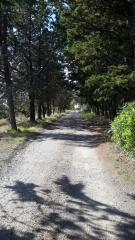 Terreno agricolo a San Gimignano (1/5)