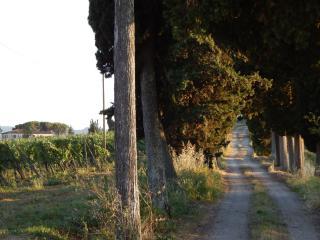 Azienda agricola in vendita a Pisa (24/80)