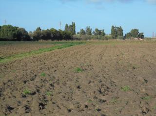 Terreno agricolo a Campiglia Marittima (4/5)