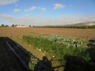 Terreno agricolo a Campiglia Marittima (1/5)